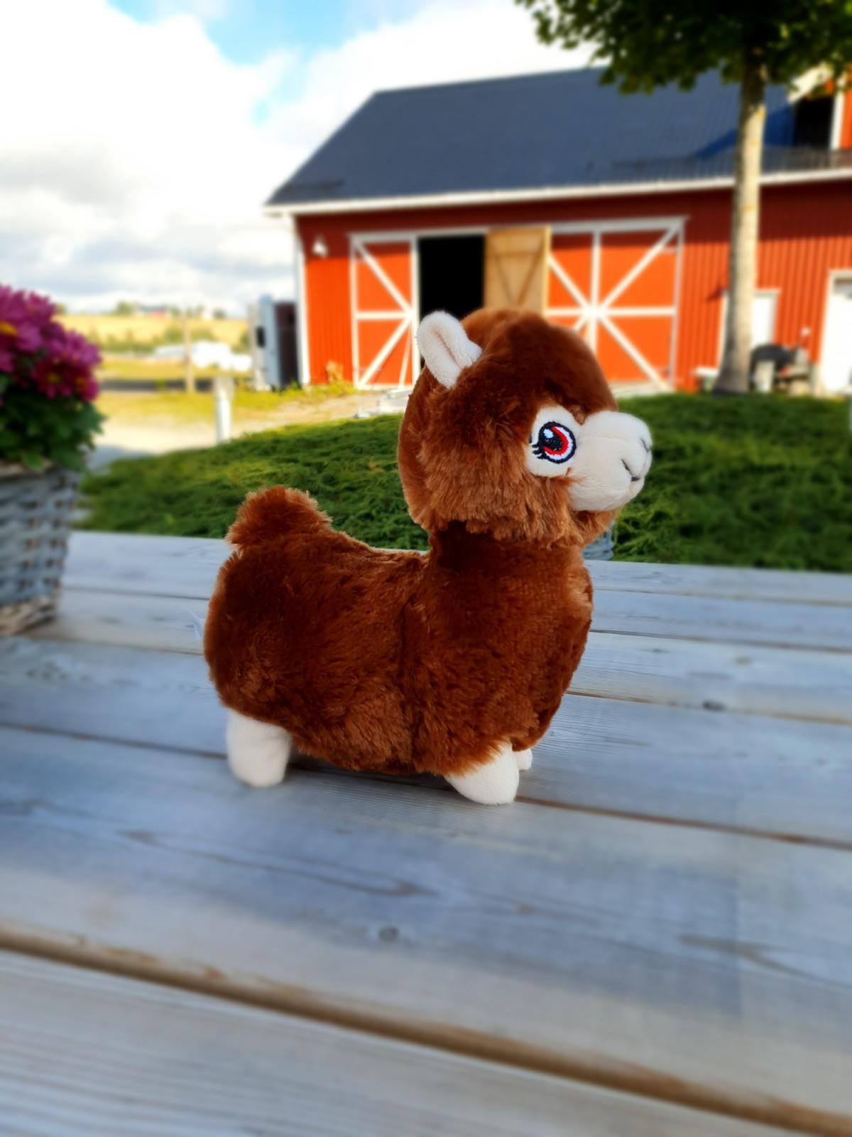 Alpakkavandring - Bamse brun siden
