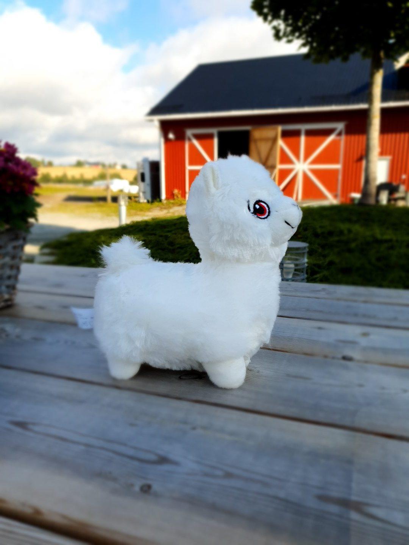 Alpakkavandring - Bamse hvit siden