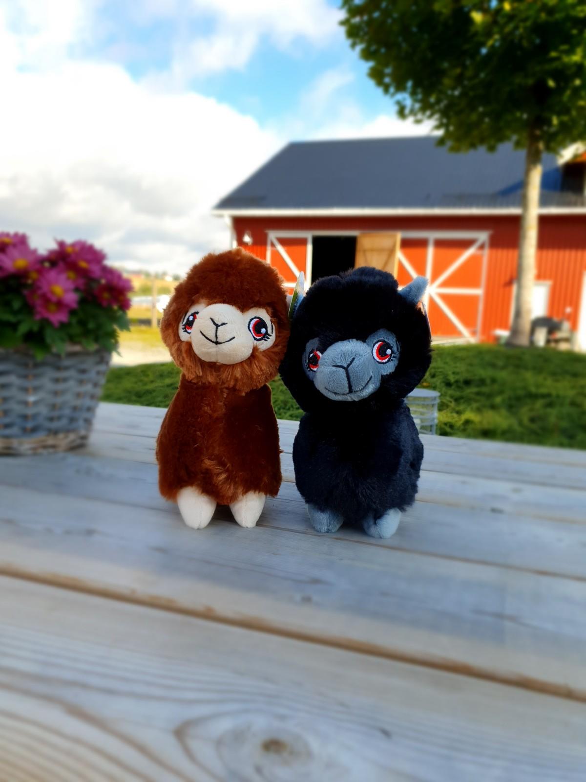 Alpakkavandring - Bamse sort brun