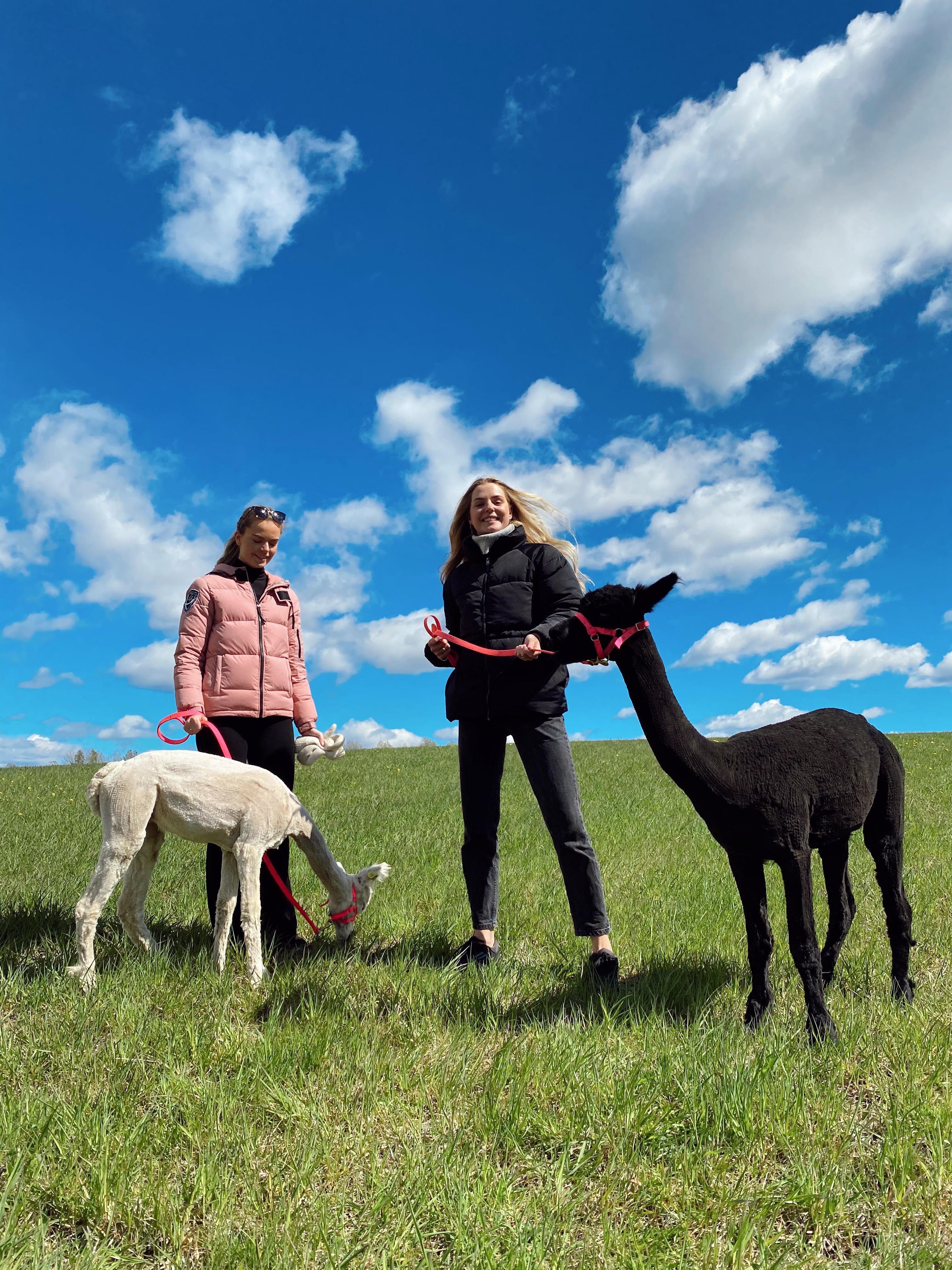 Alpakkavandring - @heleneholtop og @lkjohannessen