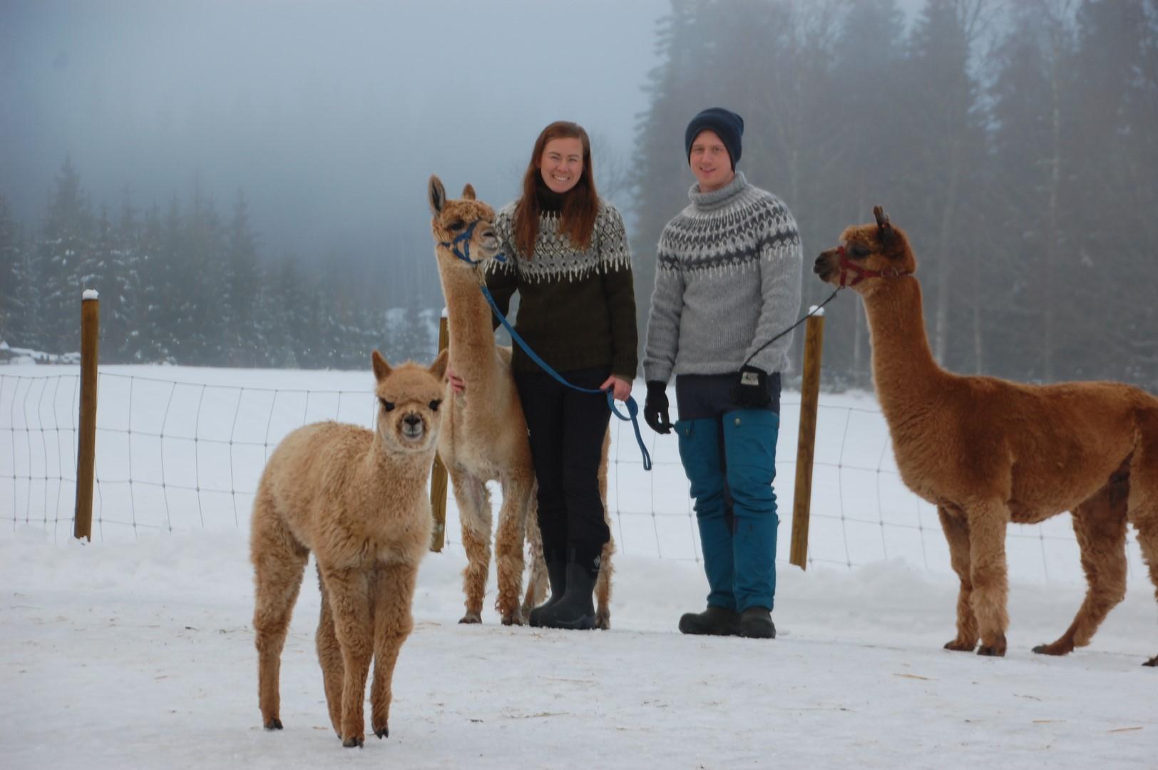 Alpakkavandring i Hurdal