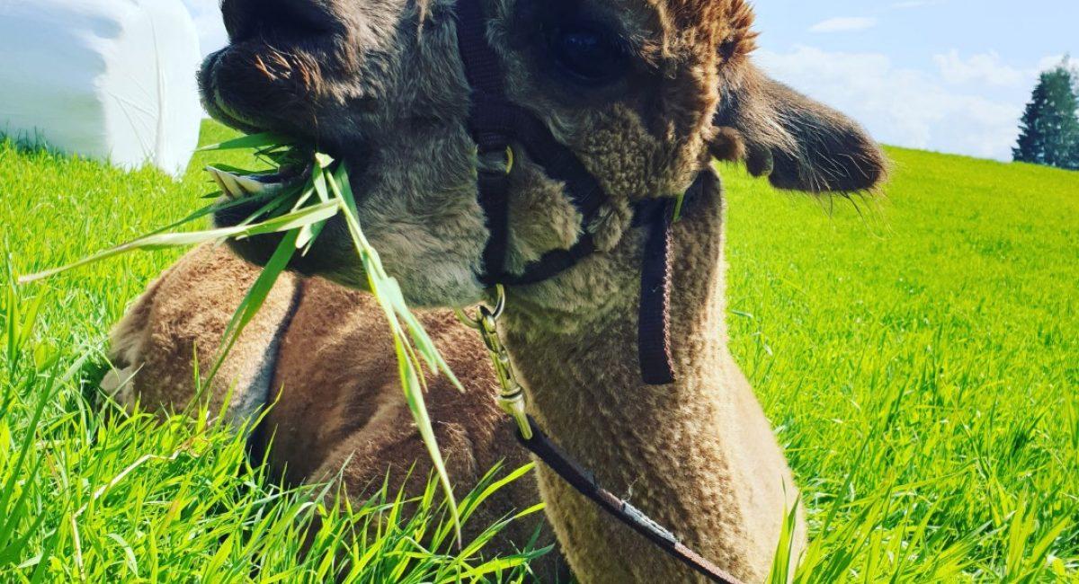Joey koser seg i gresset