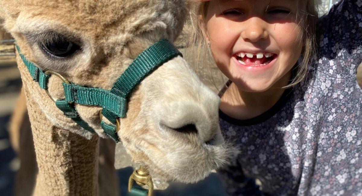 Alpakkavandring og barn
